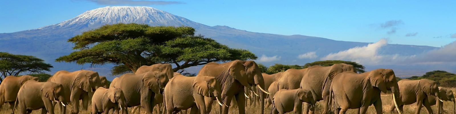 Foto Afrika reizen