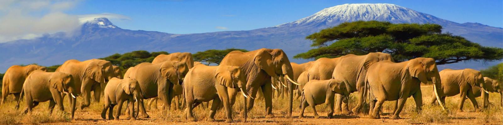 Löwe auf Safari Reisen