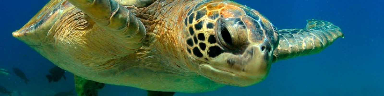 Galapagos Reisen