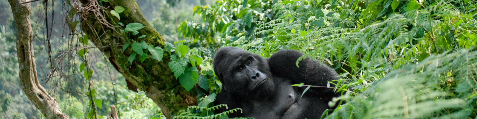 Uganda Rundreise durch einen Nationalpark