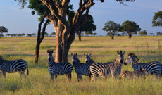 Tanzania tours - 4-Day Safari: Mikumi & Udzungwa National Park