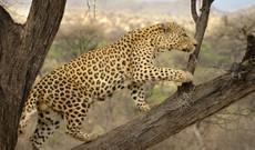 Namibia tours - 13 Day Naturally Namibia