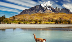 Chile Rundreisen - Chiles Naturvielfalt | Patagonien, Seengebiet & Atacama