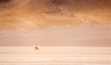 Bolivia tours - Altiplano's Great Outdoors in Chile & Bolivia
