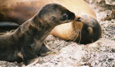 Ecuador Rundreisen - Galapagos Inseln per Segelkatamaran
