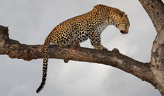 South Africa tours - 18 Day Kruger National park And Garden Route Tour