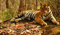 India tours - Tigers, Taj, Palaces & more