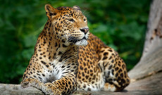 Sri Lanka tours - 14-Day Best of Sri Lanka and the Maldives