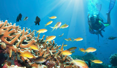 Tansania Rundreisen - Tauchferien auf Sansibar: Korallenriffe & Wracks