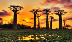 Madagascar tours - 10 Day Magical Madagascar