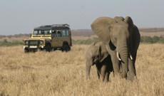 Kenya tours - 12 Day Best of Kenya Bush Adventure