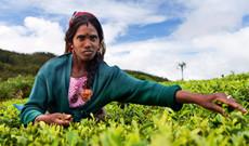 Sri Lanka Rundreisen - Sri Lanka: Traumhaftes Sri Lanka