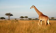 Kenia Rundreisen - Einzigartiges Kenia: Busch & Beach