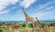 Uganda tours - The Ultimate Uganda 12-Day Tour