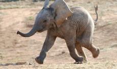 Südafrika Rundreisen - Südafrika Familien Safari (malariafrei)