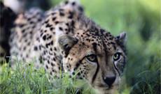 South Africa tours - 4-Day Greater Kruger National Park Safari Tour