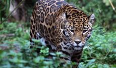 Peru tours - 17-Day Manu Jungle & Machu Picchu  Experience