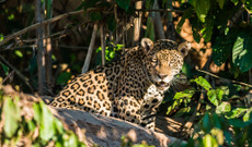 Brazil tours - 7 Day Nature Exploration In Brazil's Northern Pantanal