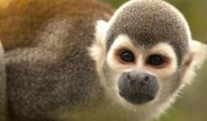 Ecuador Rundreisen - Privatreise durch Ecuador | Anden & Amazonas