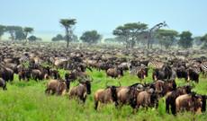 Tansania Rundreisen - Camping Safari Tansania