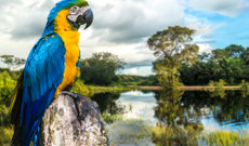 Brazil tours - Natural Abundance in Brazil