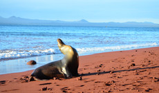 Ecuador tours - Islands Hopping Galapagos