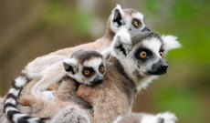 Madagascar tours - 10 Day Riches Of Madagascar