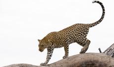 Botswana tours - 11-Day Camping Safari Tour in Botswana