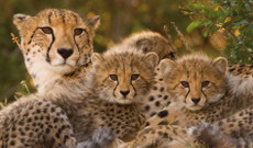 Tanzania tours - 6-Day Spectacular Kenya Wilderness Safari Tour