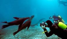 Ecuador tours - Ecuador Galapagos Scuba Dive Trip