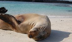 Ecuador tours - From the Andes to the Galápagos Islands