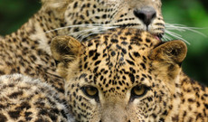 Sri Lanka tours - 8 Day Sri Lanka Wildlife Tour