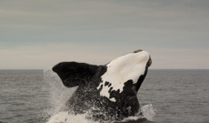 Chile tours - 5 Day Family Whale Watching Trip