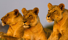Tanzania tours - 7-Day Safari: Mikumi & Ruaha National Park
