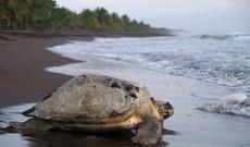 Costa Rica tours - Amazing Costa Rica Wonders