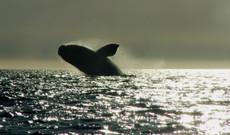 Chile Rundreisen - Reisebaustein Argentinien: Puerto Madryn