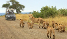 South Africa tours - 6-Day Highlights Of Kruger National Park Tour