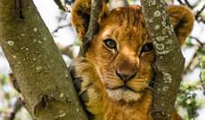 Tanzania tours - 6-Day Tarangire, Manyara, Serengeti & Crater