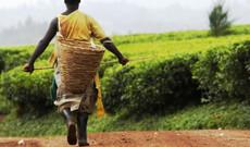 Uganda Rundreisen - Die Highlights von Uganda in 12 Tagen