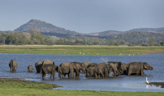 Sri Lanka Rundreisen - Kurzreise durch Sri Lanka von 9 Tagen