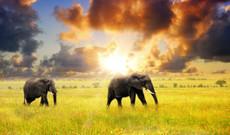 Tanzania tours - 4-Day Safari: Tarangire, Manyara & Ngorongoro