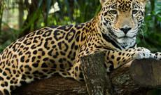 El Salvador tours - Belize Experience