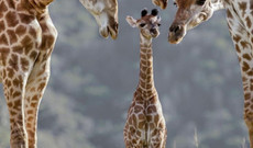 South Africa tours - 10-Day Family Adventure in South Africa