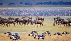 Tanzania tours - Best Of Tanzania in 12 Days