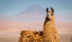 Chile tours - Explore Northern & Southern Chile