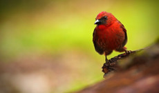 Costa Rica tours - 10 Day Costa Rica: Birdwatching & Jungle Experience