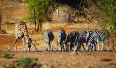 Südafrika Rundreisen - Abendteuer, Krüger Safari und Kapreise