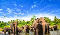 Sri Lanka Rundreisen - Naturparadies im Indischen Ozean