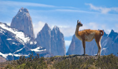 Argentina tours - Selfdrive through National Parks in Southern Patagonia