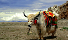 China tours - 10-Day Tibet Pilgrimage